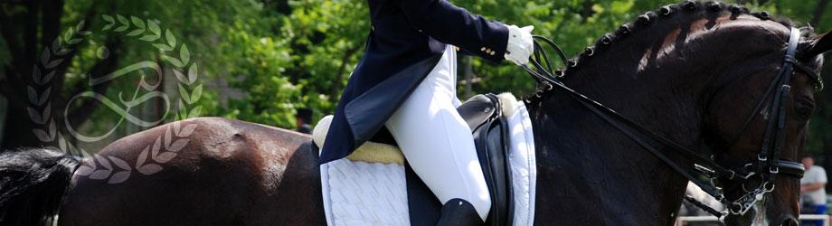 Zucht und Ausbildung leistungsbereiter Pferde